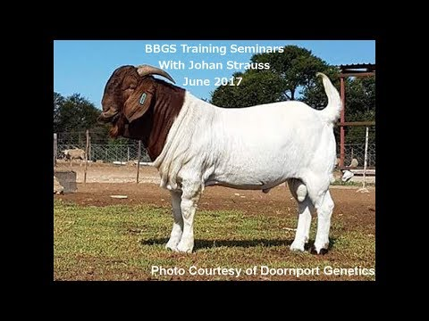 South African Boer Goat UK Breed Standard Presentation For The BBGS By Johan Strauss  June 2017