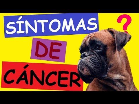 Síntomas del cáncer de próstata en perros machos