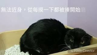 碧山巖,小名BB,小碧碧原以為是浪貓,結果是有人自收容所領養的貓因為錯誤...