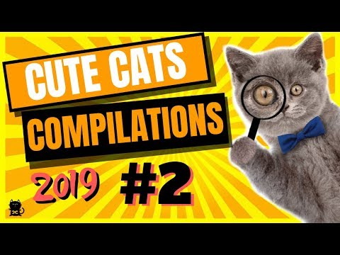 Cute Cats Compilation 2019 - Funny And Cute Cats - Cutest Cats Compilation 2019 #2