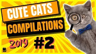 Cute Cats Compilation 2019 - Funny And Cute Cats - Cutest Cats ...
