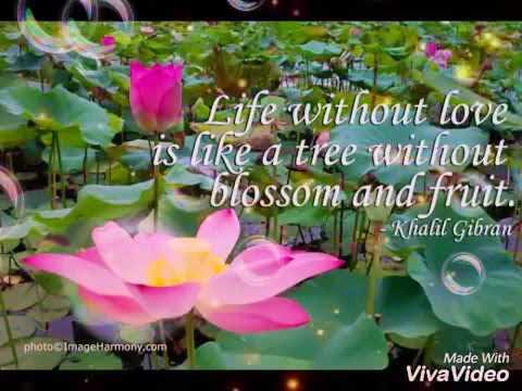 Nature Love Whatsapp Status Nature Beautiful Quotes Status