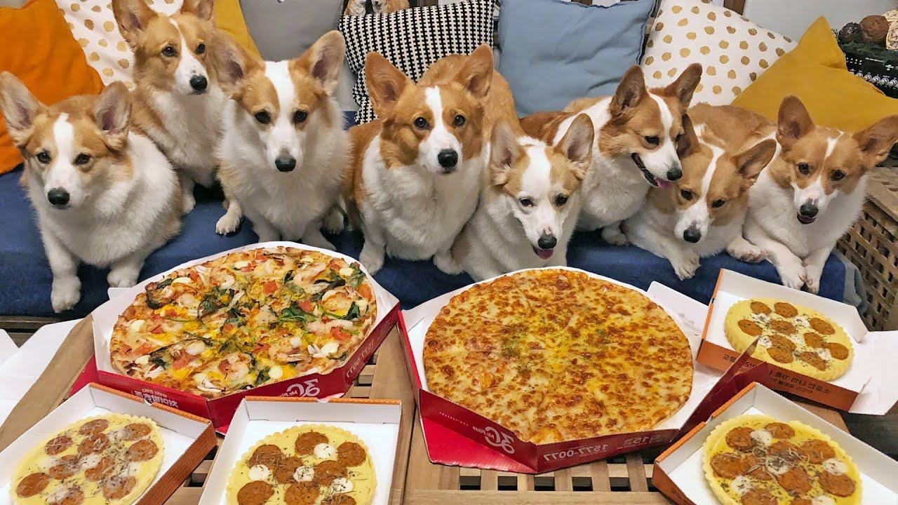 시골 댕댕이들의 견생 첫 피자 🍕ㅣ  Country Puppy's First Pizza!!