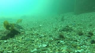 海釣り公園、水中映像、青イソメ2019年3月下旬 thumbnail