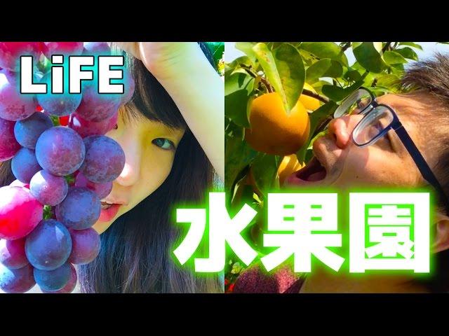 RyuuuTV LiFE~日本水果園採水果記