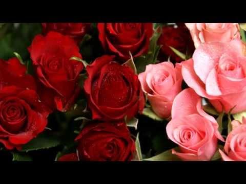 Красные розы. Язык цветов роз. Релакс ТВ5