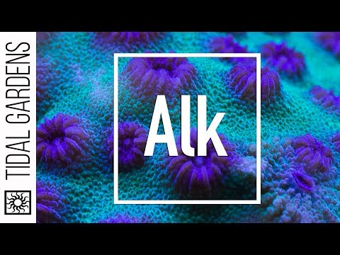 Reef Chemistry: Alkalinity Level Testing