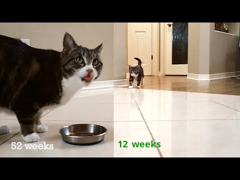 Kitten Time Lapse - 1 Year in 2 Minutes!