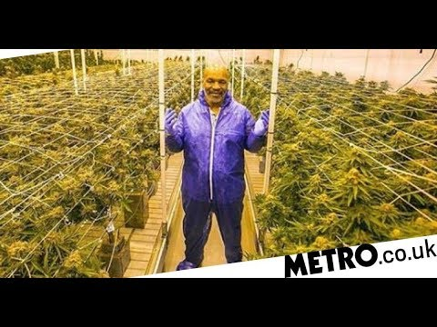 Mike Tyson on smoking 40k of weed per month