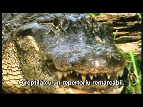 Fooled by Nature - Communicative Creature - Trailer