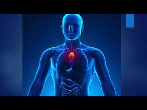 Органи кровотворення та імунного захисту. Гістологія