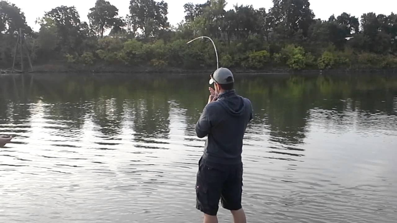 Bank fishing for sacramento river king salmon youtube for Kings river fishing