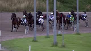 Vidéo de la course PMU PRIX DE DUINDIGT