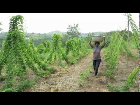 Dry Season Vegetable Farming - Daniel's Story