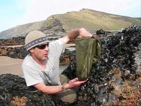 foraging and cooking mussels part 1 for you tube