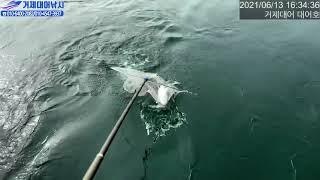 거제대어낚시 대물 참돔낚시~65센티 장원 연일 먼바다 …