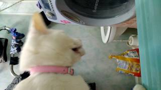 Кошка и пробка