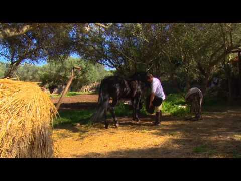 El cavall menorquí i les Festes de Gràcia - Uep IB3