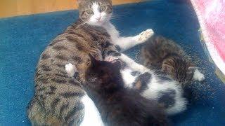 Милые котята курбобики(1 мес)