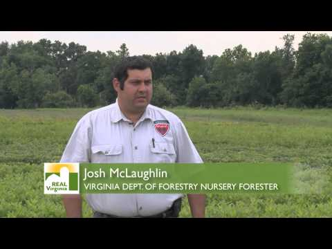 A Century of Service for Va. Dept. of Forestry