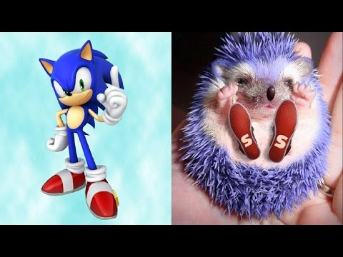 SONIC in REAL LIFE All Characters