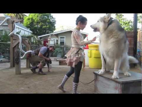 Berkeley Trick Dog Training: Canine Circus Class