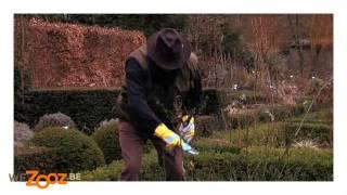 Le Rosier - Vidéo jardinage | GAMMA Belgique