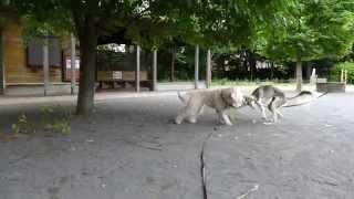 久しぶりに森の公園へ。仲良しのロサちゃん、あずきちゃん、アントン君...