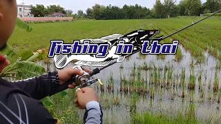 How to catch Snakehead Fish in Thailand l  Snakehead Fish l snakehead fish attack soft frog lure ep1