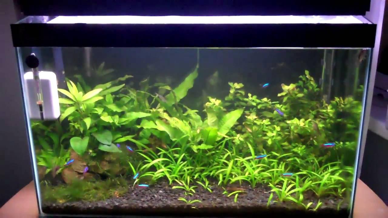 Beginner fish youtube for Best fish tanks for beginners