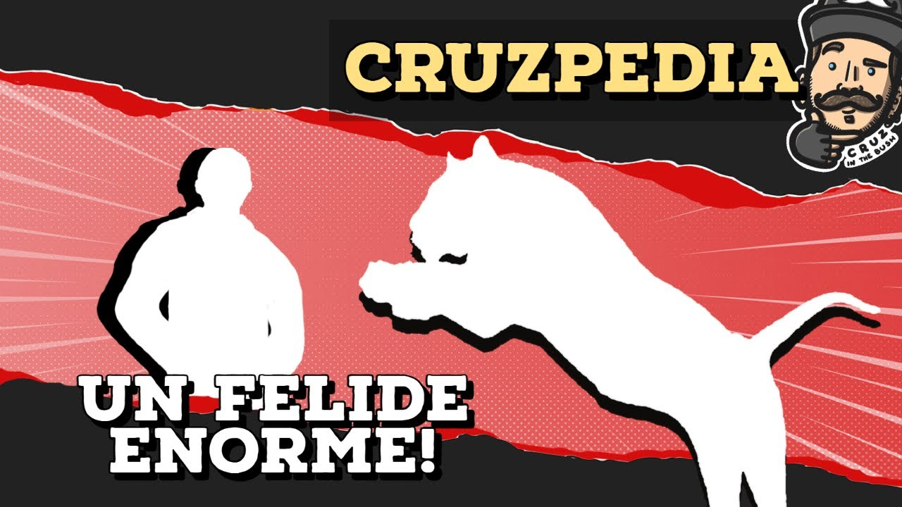 CRUZPEDIA: IL LIGRE, L'IBRIDO FELIDE PIÙ GRANDE DEL MONDO!