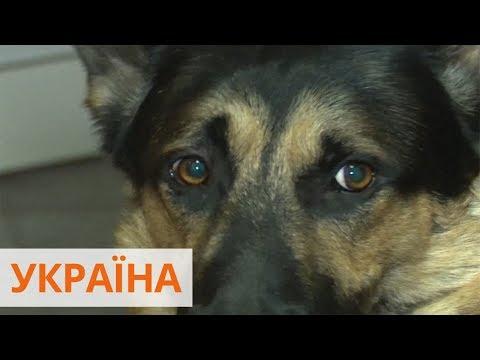 Агрессивного пса хотят отдать на перевоспитание через аукцион