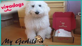 Vivadogs (Pfötchenbox) UNBOXING | Überraschungsbox für Hunde