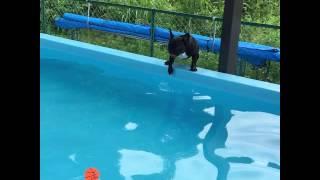慣れないプールで必死に泳ぐ姿が笑えます(^^)