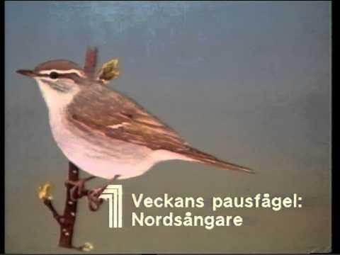 Veckans pausfågel TV1 1986-06-22