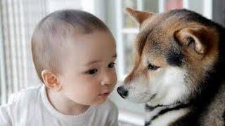 【涙腺崩壊】飼い犬がしきりに息子の側に寄り添い震えていた。2歳児を救った『犬の訴え』に愕然とする thumbnail