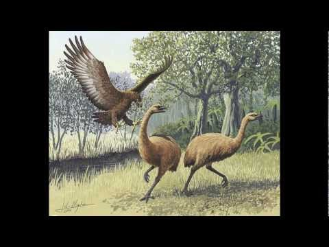 Top 10 Most Dangerous Prehistoric Birds