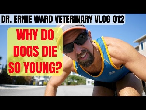 Why Do Dogs Die So Young? Veterinary Vlog 012 - Dr. Ernie Ward
