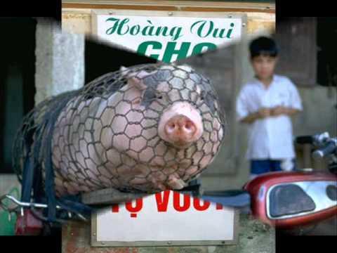 Chỉ có ở Việt Nam 03
