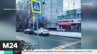 В Москве нашли самую узкую зебру - Москва 24