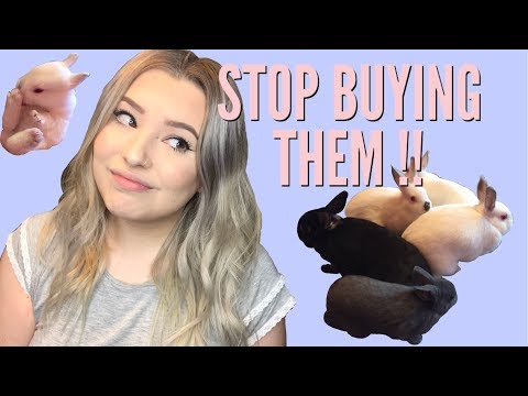 STOP BUYING YOUR KIDS PET RABBITS. THEY'RE NOT EASTER GIFTS.