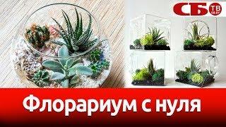 Как сделать флорариум