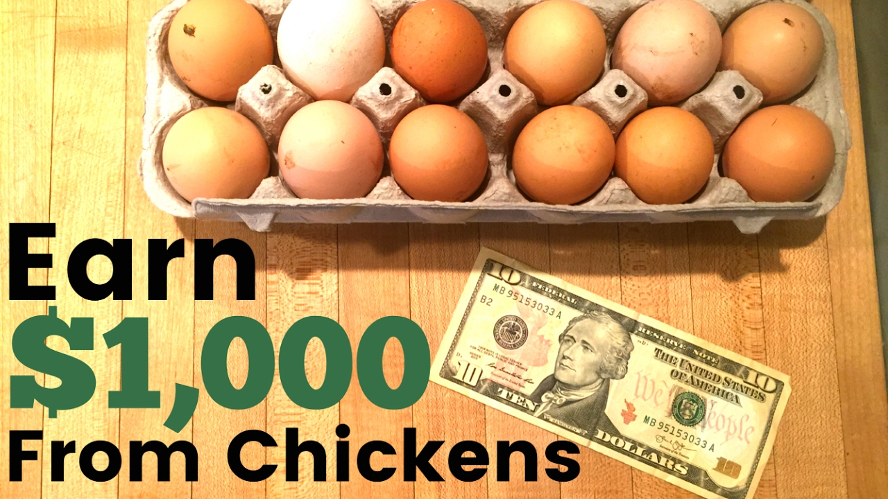 How To Make Money Raising Egg Laying Chickens