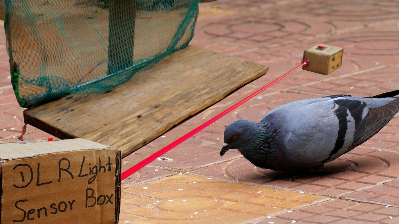 Bird Trap Technology - DLR Light Sensor Bird Trap