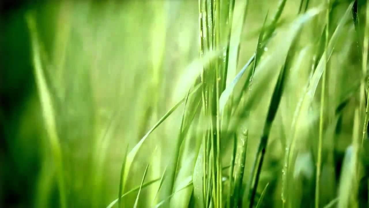 Green.De