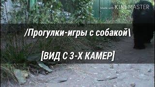 ИГРАЕМ С СОБАКОЙ [ВИД С 3-Х КАМЕР]