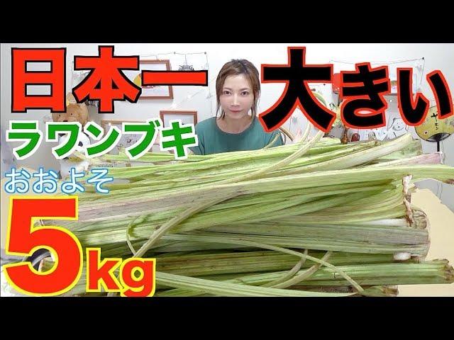【大食い】日本最大のふき!ラワンブキのきんぴら&おにぎり10個&お味噌汁1キロ[約4キロ]北海道足寄町【木下ゆうか】
