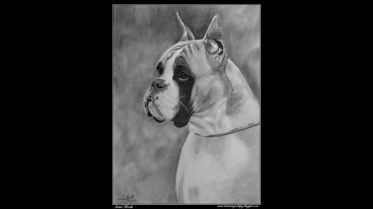 Dibujo a lpiz  Pencil Drawing Boxer Xira de Loermo dog  YouTube