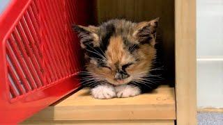 낯선 공간, 책장에서 잠든 고양이
