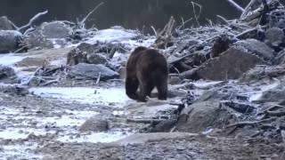 Brotherhood Bridge Grizzly Bear Juneau Alaska